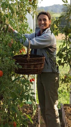 Susanne Schneider - Tomatenernte